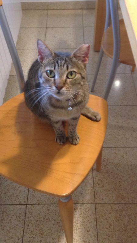 כפרניק 67 אבדה חתולה