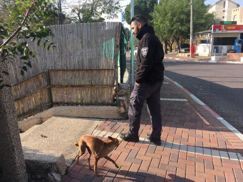כפרניק WhatsApp-Image-2019-01-30-at-03.52.18 כלבים משוטטים ופעילות בקהילה