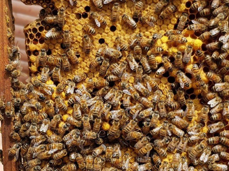 כפרניק 20180412_121758 קורס גידול דבורים בגינתיא