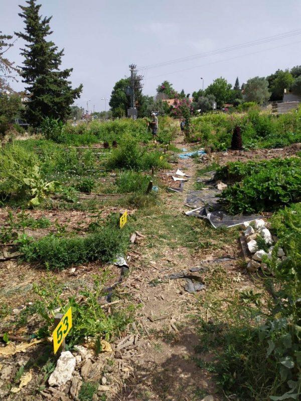 כפרניק WhatsApp-Image-2019-06-09-at-11.12.05 שבועות בגינה הקהילתית