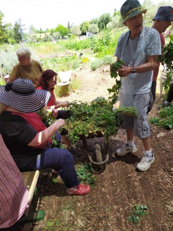 כפרניק WhatsApp-Image-2019-06-09-at-11.14.30 שבועות בגינה הקהילתית