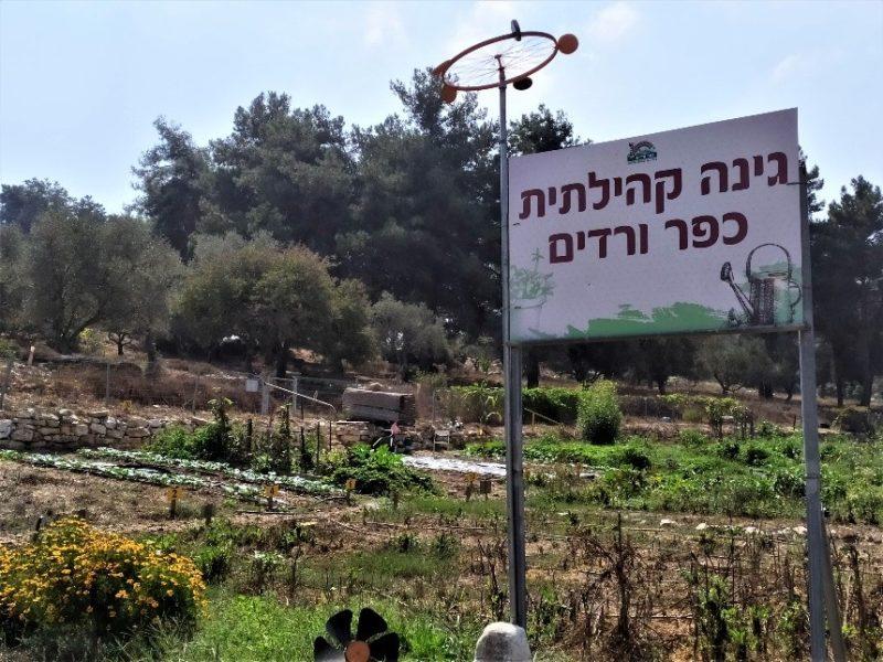כפרניק 222121490-scaled הגינה הקהילתית מחדשת פניה
