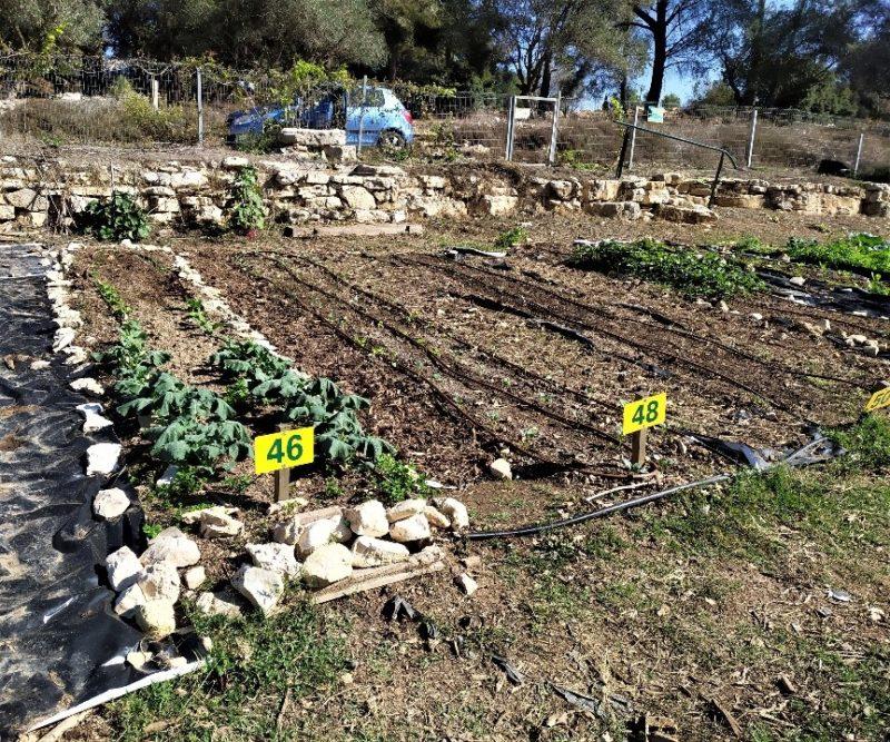 כפרניק 2227809-scaled הגינה הקהילתית מחדשת פניה