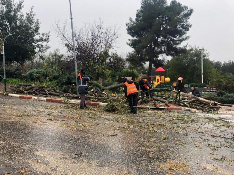 כפרניק WhatsApp-Image-2019-12-26-at-08.33.571-scaled עץ קרס, סעו בזהירות