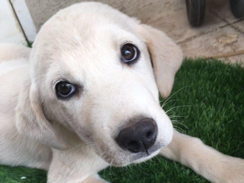 כפרניק laky2-001-scaled זהירות – כלבת!