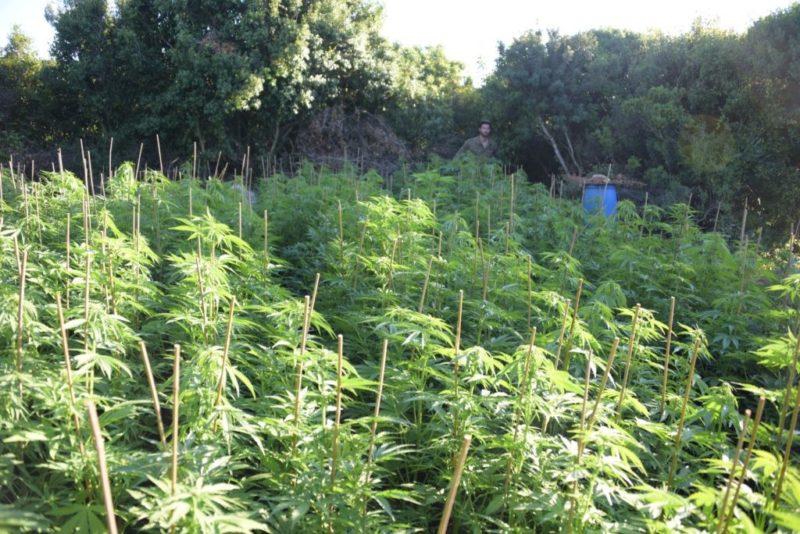 כפרניק 5x6mdnQw-scaled חקלאות סמים בכישור, הרואין בראמה וקאנביס בנהריה