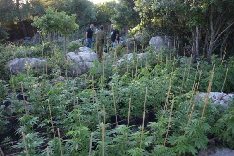 כפרניק HTdWUwlQ-scaled חקלאות סמים בכישור, הרואין בראמה וקאנביס בנהריה