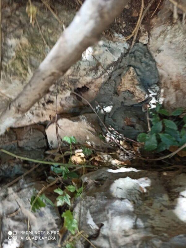 כפרניק WhatsApp-Image-2020-06-23-at-10.23.31-scaled ממגרים את שפני הסלע