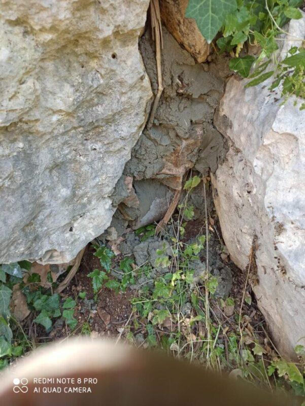 כפרניק WhatsApp-Image-2020-06-23-at-10.23.32-scaled ממגרים את שפני הסלע
