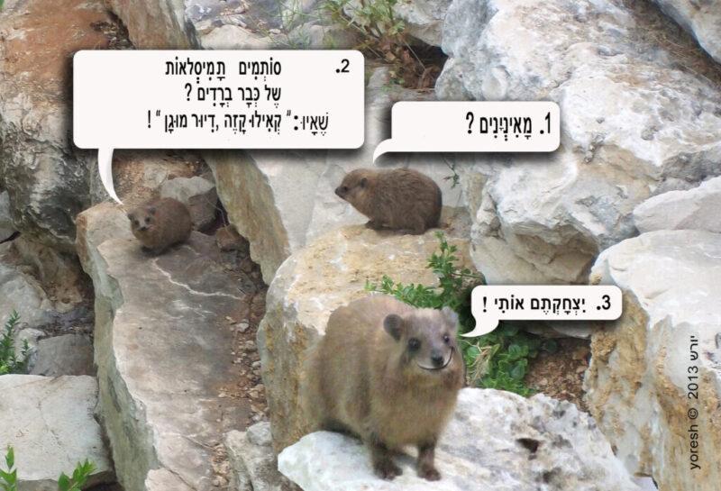 כפרניק shafan-yores-scaled ממגרים את שפני הסלע