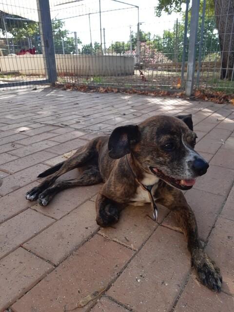 כפרניק 46966c4a-c082-411c-bc7b-0879b82a13a6 האם הכלב הזה שייך לכם?