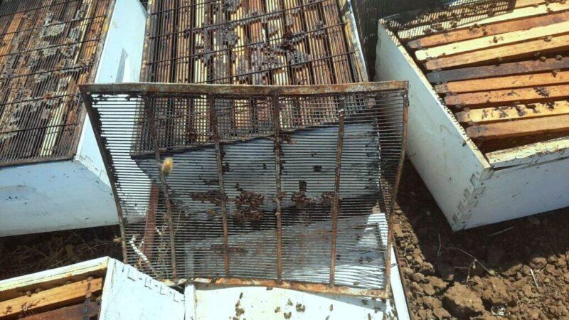 כפרניק 0009877-scaled עשרות כוורות וחלות דבש נגנבו במנות