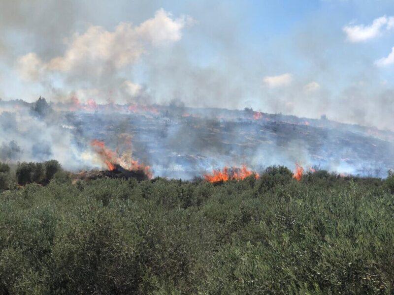כפרניק WhatsApp-Image-2020-08-17-at-15.55.10-scaled שריפה באזור כליל, ג'ת, אבו סנאן