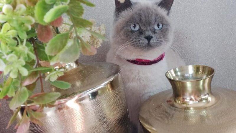 כפרניק 132595330_427329845294488_7853532352915543429_n-scaled מי ראה חתולה