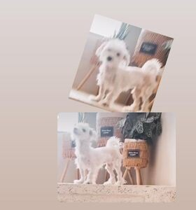 כפרניק 131354037_153089046883277_8689410730031534091_n מי ראה את הכלבה נאנא?